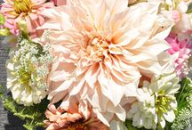 Summer Wedding Bouquets / With over 200 varieties of annual flowers our bouquets are as unique as our brides.
