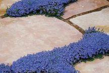 Special Touches for the Garden / by Diane Bilodeau Designer d'Intérieur