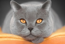 A World of Cats / I love cats... all cats... they make my world go 'round! / by Francie Gross