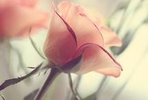 Art, Music, and Roses / by Jan Evett
