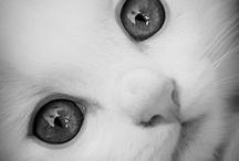 Cuteness  / by Jan Evett