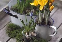 Garten/Outdoor Deko / Garten, Draußen, Natürlich, Natur, Vintage, Deko, Pflanzen.