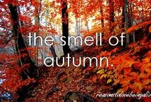 Seasonal - Autumn / by Denise Luechtefeld