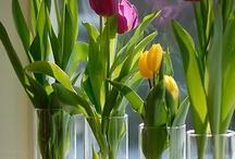 Seasonal - Spring / by Denise Luechtefeld
