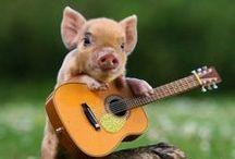 This little piggie... / by Nina Haraguchi