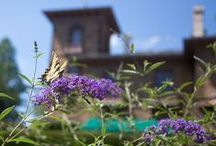 Campus Visitors on the Wing / Prospect Garden becomes a stop for the migrating Eastern Tiger Swallowtail butterfly. (Photos by Danielle Alio and Denise Applewhite)