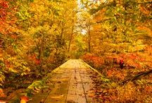 autumn ablaze / my favorite season! everything about autumn is perfection. / by ellbee