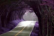 pathways / by Tamara Ellenbecker