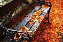 Autumn leaves / by Anneli Hidalgo