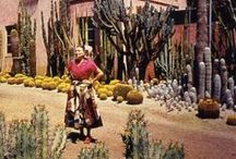 Lush and Gardens / Green - lush - garden - cactus - succulent - grass - tree - plants - flower - patio