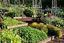 Shannonigan's, How does your garden grow??? / Gardening plans, tips, tricks, ideas...  / by Shannon Rickey