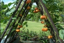 Getting Outdoors and Growing STUFF / Making Outside Livable in Texas / by Judy Jones