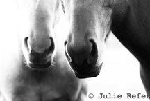 Horse Photography by Julie Refer / A selection of my fine art horse photography.