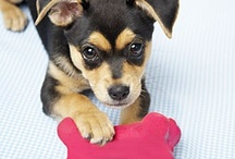 Caring for Pets / Care for your cats and dogs the right way with our tips from experts.