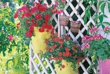 Garden Inspiration / Gardening ideas that inspire us.