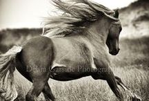 Beautiful Horses / Horse photography I would hang in my home.