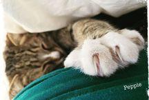 Katzenwelt / Alles für und um die Katz