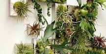 R I V E T E R / Interior living wall / plant ideas for The Riveter