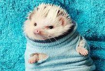 Cute animals are cute