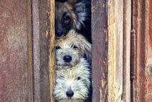 Puppies & Cutties