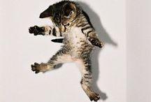 Maoww / / Cats