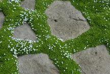 groundcovers