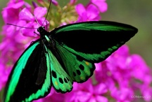 Butterflys & Birds / by Kim Blinn