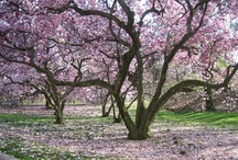 Trees of Beauty / by Debbie Stone