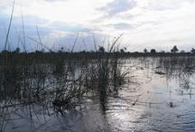 Botswana 2012 scenery