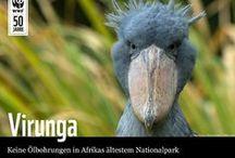 SOSVirunga / by WWF Deutschland