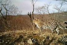 Beobachtungen aus Kamerafallen / Kamerafallen ermöglichen uns die Beobachtung von seltenen und scheuen Tieren in ihrem natürlichen Lebensraum. Hier zeigen wir die schönsten Videos.
