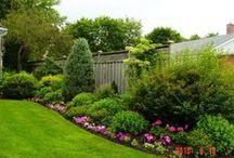 Garden & Yard / by Jenn Robertson