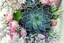 Flowers / Gėlės