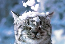 Just Too Cute... / by Jill Knutson