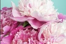 Spring Sprung / Flowers, spring, home decor, gardens