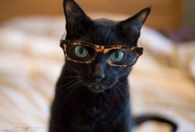 Kitties make me smile / ...and black cats are the best!!!