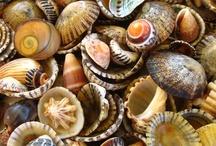 Coastal and shells