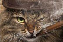 Cat Nip / cats, kitties, humor