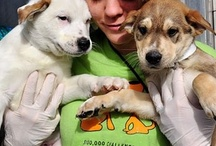Top Nonprofits: Animal Welfare, Rights, & Protection / 169 national animal welfare, rights, & protection experts recommended the following 15 outstanding nonprofits for Philanthropedia: 