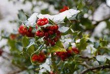 A Winter Garden / by Niki Dague