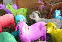 Farm2Fashion Fun / Farm and Animal fun photos