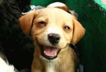 12 Best Dog Smiles You'll Ever See. / FunnyStatus.com presents 12 of the Best Dog Smile Pictures you've ever seen.