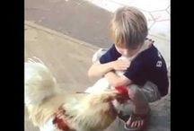 Funny Animal Videos / FunnyStatus.com presents Funny Animal Videos... Moo! Meow! Oink?