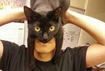 Perfectly Timed Pet Photos / FunnyStatus.com presents perfectly timed pet photos.