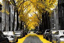 Autumn / by Niki Dague