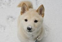 Dogs. Dogs. Dogs / Dogs. Dogs. Dogs.Dogs. Dogs. Dogs / by Pinpuff