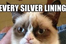 Meme - Grumpy Cat / by Gaurav Sharma