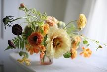 Flora / by Katie Katie