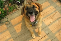 Puppy Lovin' / we love our dogs so much, and they are devoted to us in return.  I lost my baby January 2013, u may be able to relate.  I now have adopted a puppy and my baby and I are settling in ti our new life / by Lisa Howell