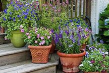 Container Gardening / by Brooke Sheridan